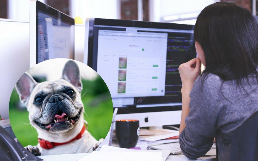 National Work Like a Dog Day – nietypowe święta